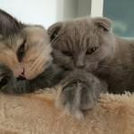 Littlebear et Lily